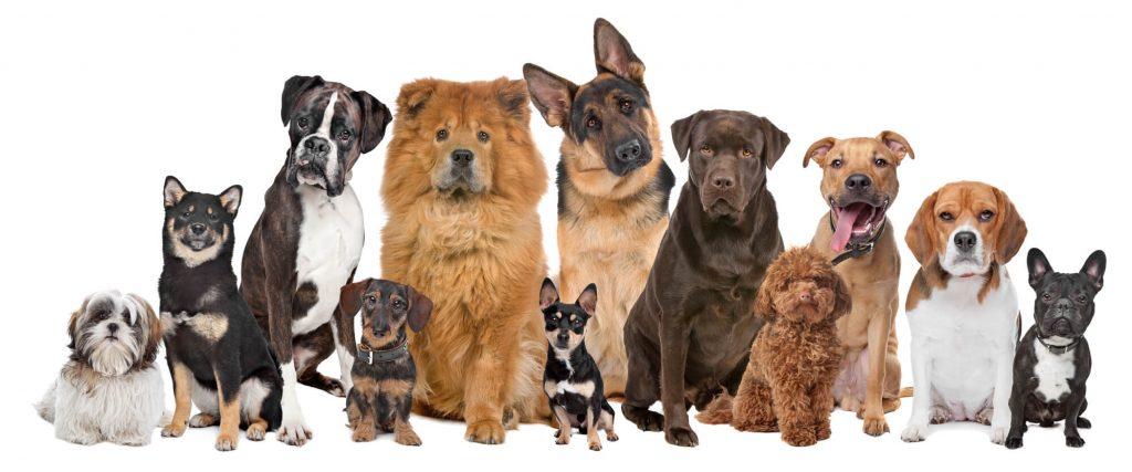 אילוף כלבים ומדריכים